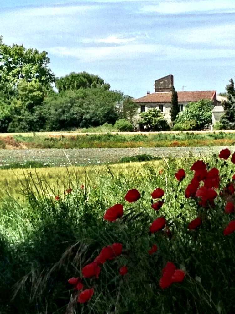 Vineyards and poppies and chateaus  with tile roofs