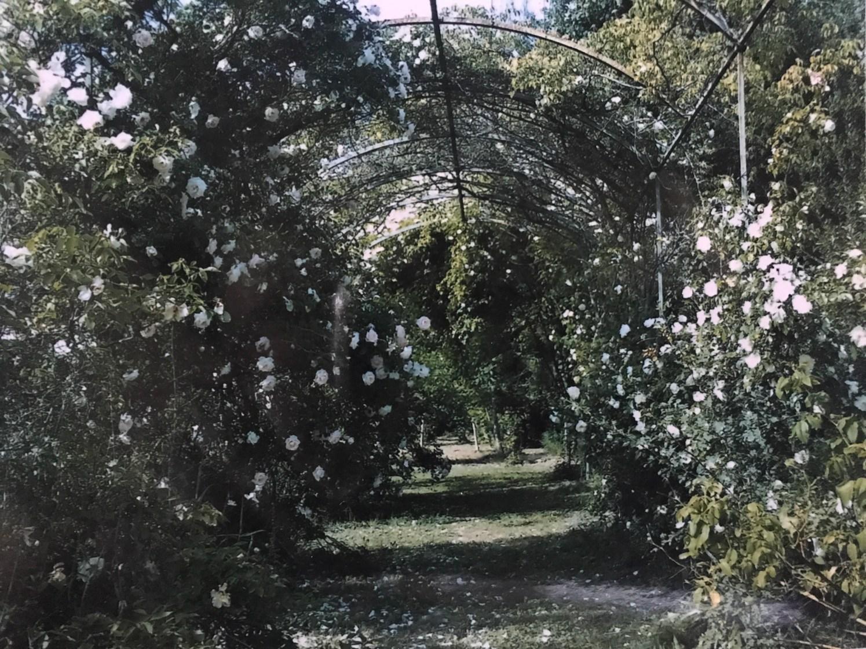 Behind French garden walls