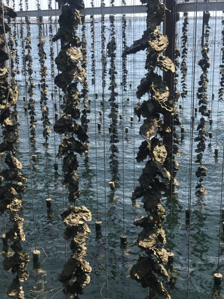 The Oyster World of Tarbouriech