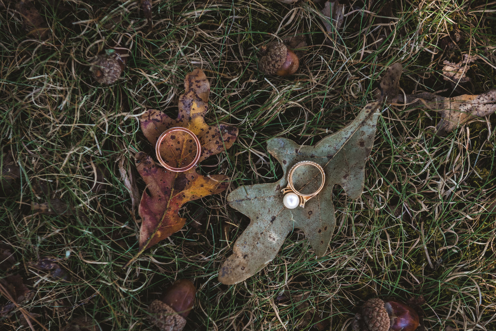 fall wedding rings sitting on leaves in parkersburg west virginia