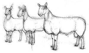 Rhinebeck sketch