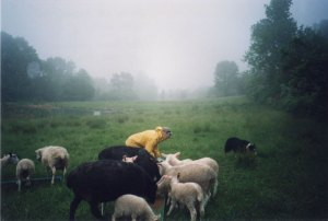 Anne Priest in lower pasture NYS