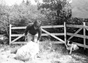 Anne Priest shearing for the first time on Blue Island Nova Scotia
