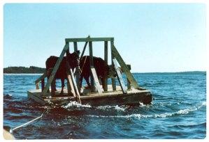 Anne Priest's cattle barge Nova Scotia