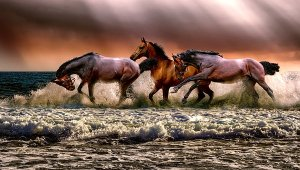 3 horses playing on a field