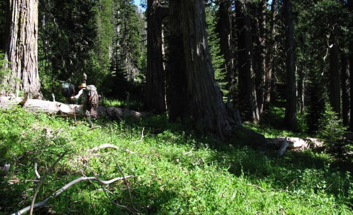 Can you find the Bigfoot Trail? Photo by Justin Rohde near Harrington Lake.