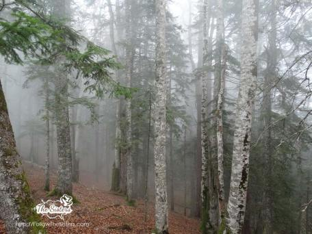 Мъглив ден някъде в горите на Босна и Херцеговина