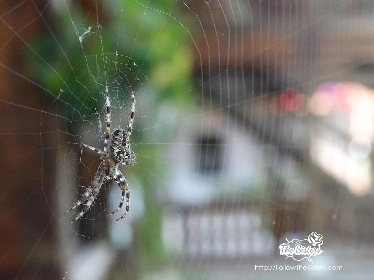 Малките неща - случаен паяк на Кливусрски Манастир