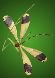 Dragon fly Transformation symbol Green transparent