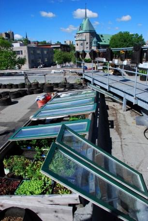 Rooftop garden (Quebec)