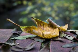 Blätter fotografieren