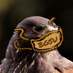 The Masked Falcon