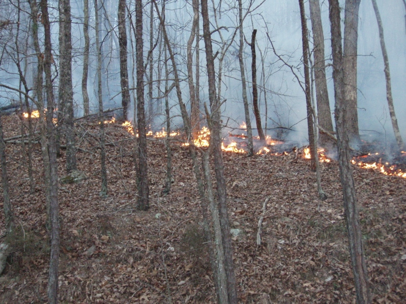 Drought of 2016 = drastic increase in Alabama wildfires