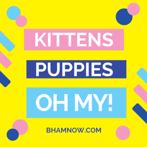 kittens-puppies-oh-my