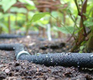 Watering Dripper hose Lowes