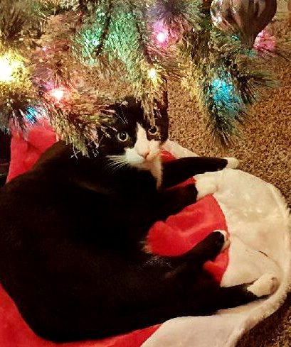 Christmas Kitty Miracle – Babycat's Story (Part 1 of 2)