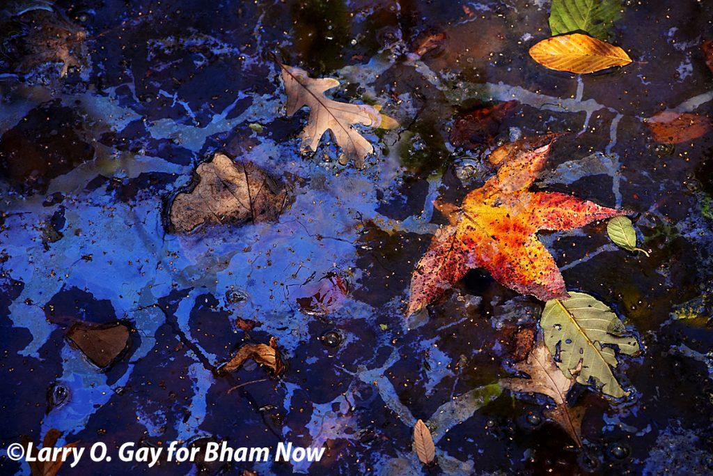 Goodbye autumn in Alabama. Hello winter! (12 photos)
