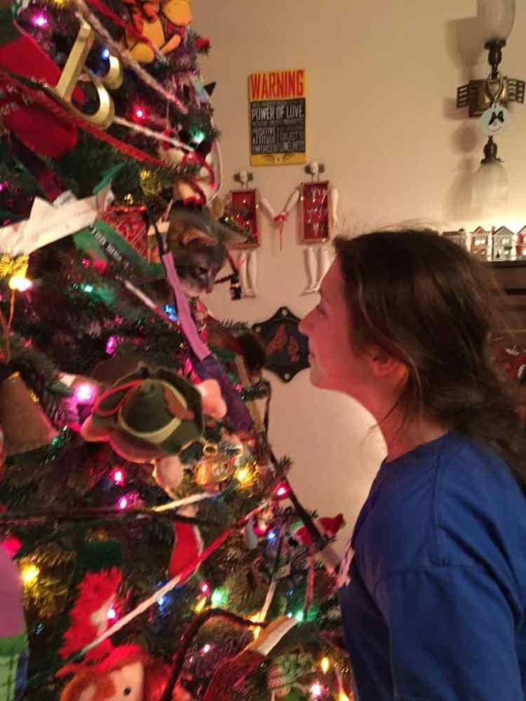 """""""Princess the Christmas Tree"""" cat"""