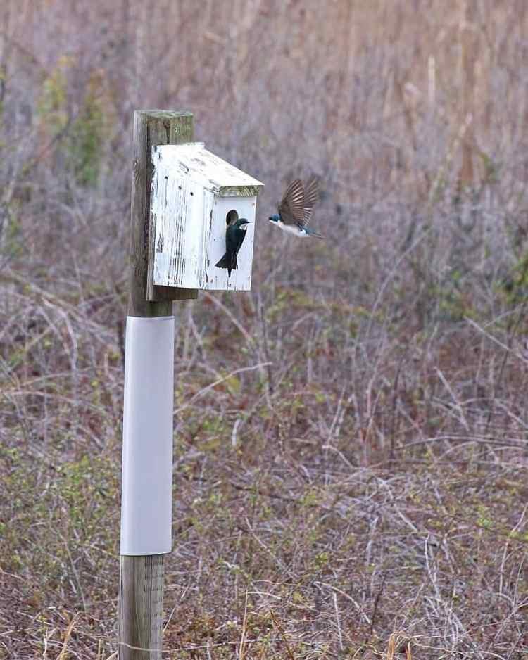 Birds in Birmingham Alabama
