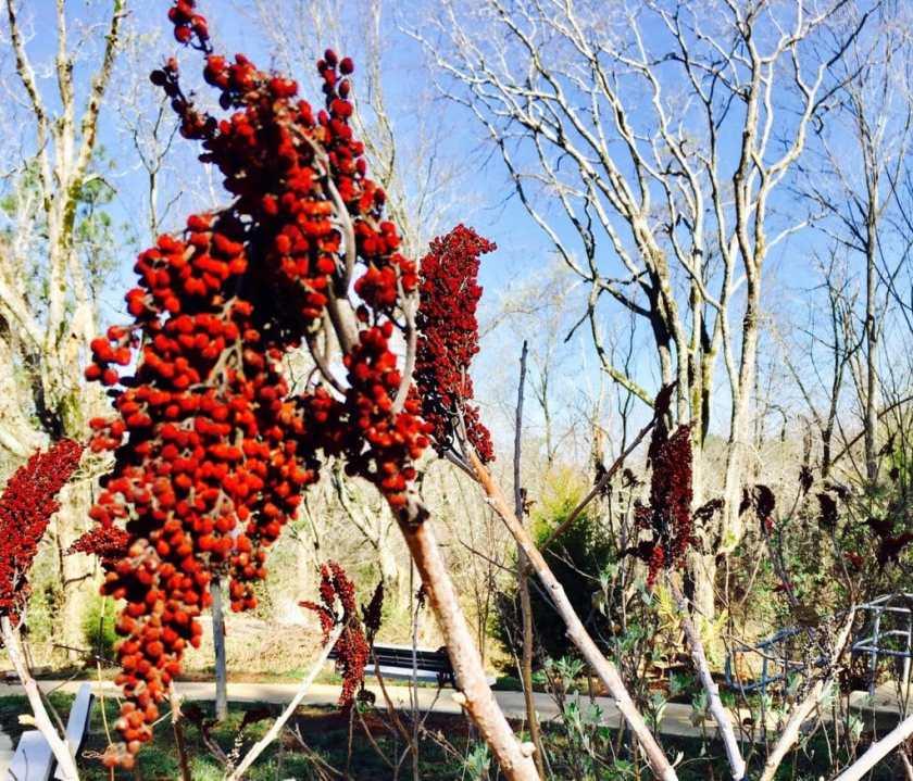 Birmingham Alabama Botanical Gardens