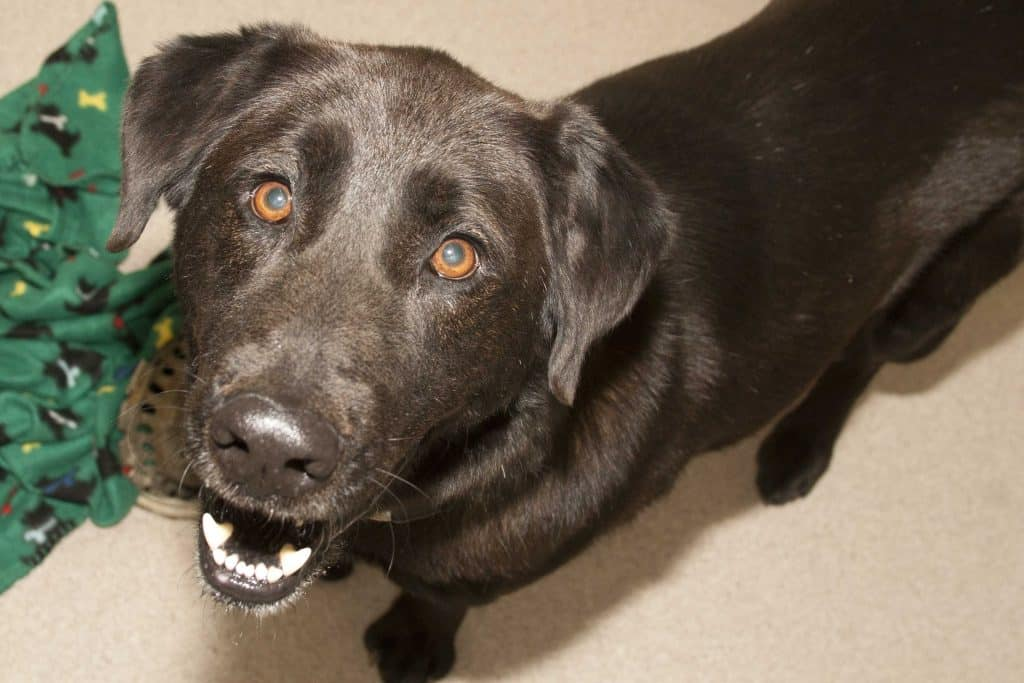 Adorable and Adoptable Pet of the Week: Buster