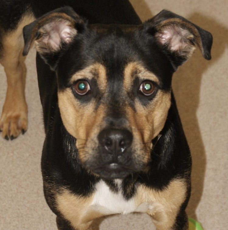Adorable and Adoptable Pet of the Week Tucker Birmingham AL Bham Now