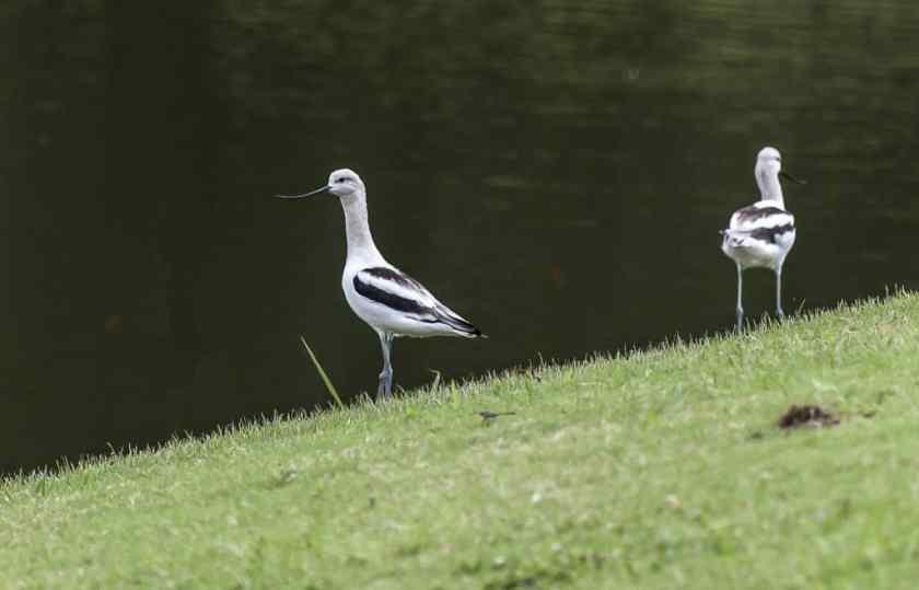 Birds of Birmingham