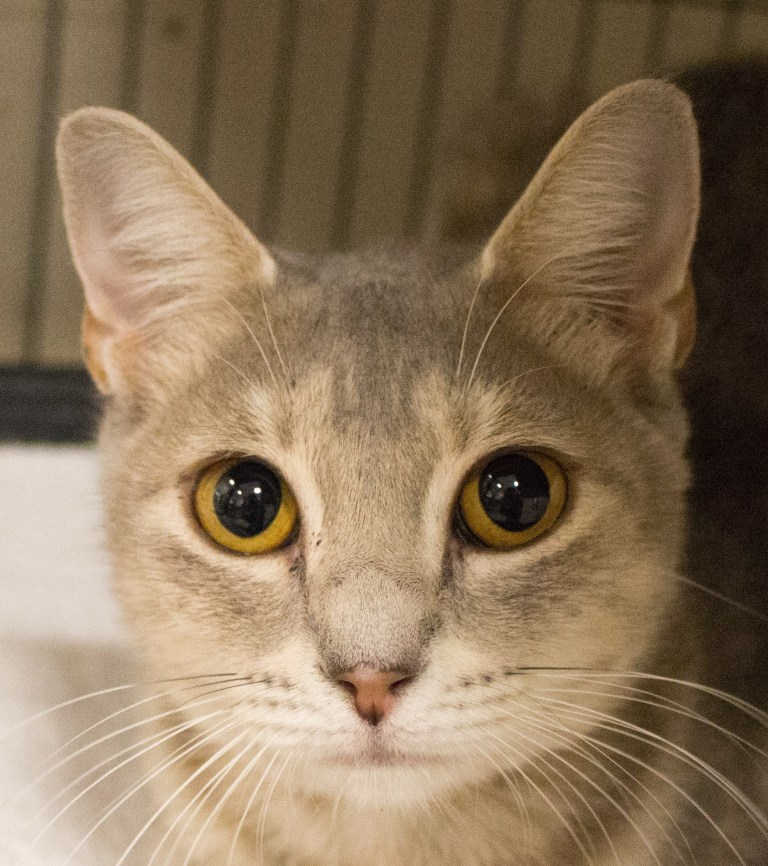Adorable and Adoptable Pet of the Week Millie Birmingham AL The Greater Birmingham Humane Society