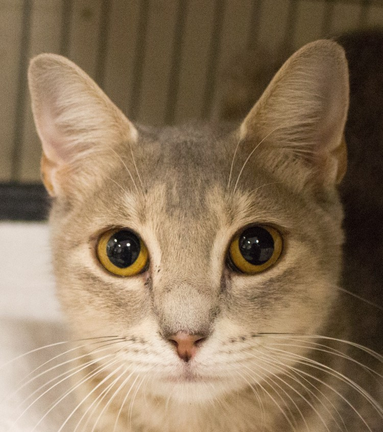Adorable and Adoptable Pet of the Week Millie Birmingham AL Bham Now
