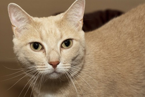 Adorable and Adoptable Pet of the Week Aubie Birmingham AL Bham Now