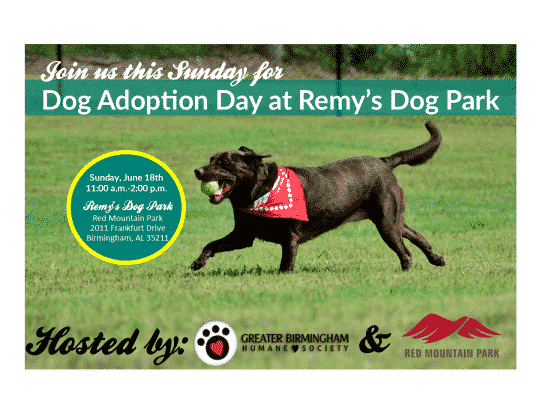 First Adoption Day is coming to Remy's Dog Park this Sunday