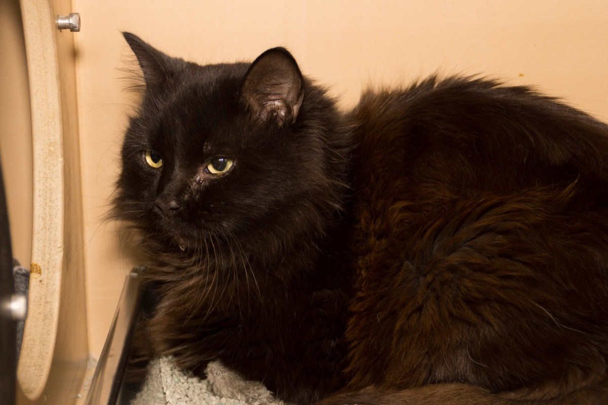 Adorable and Adoptable Pet of the Week: Shadow