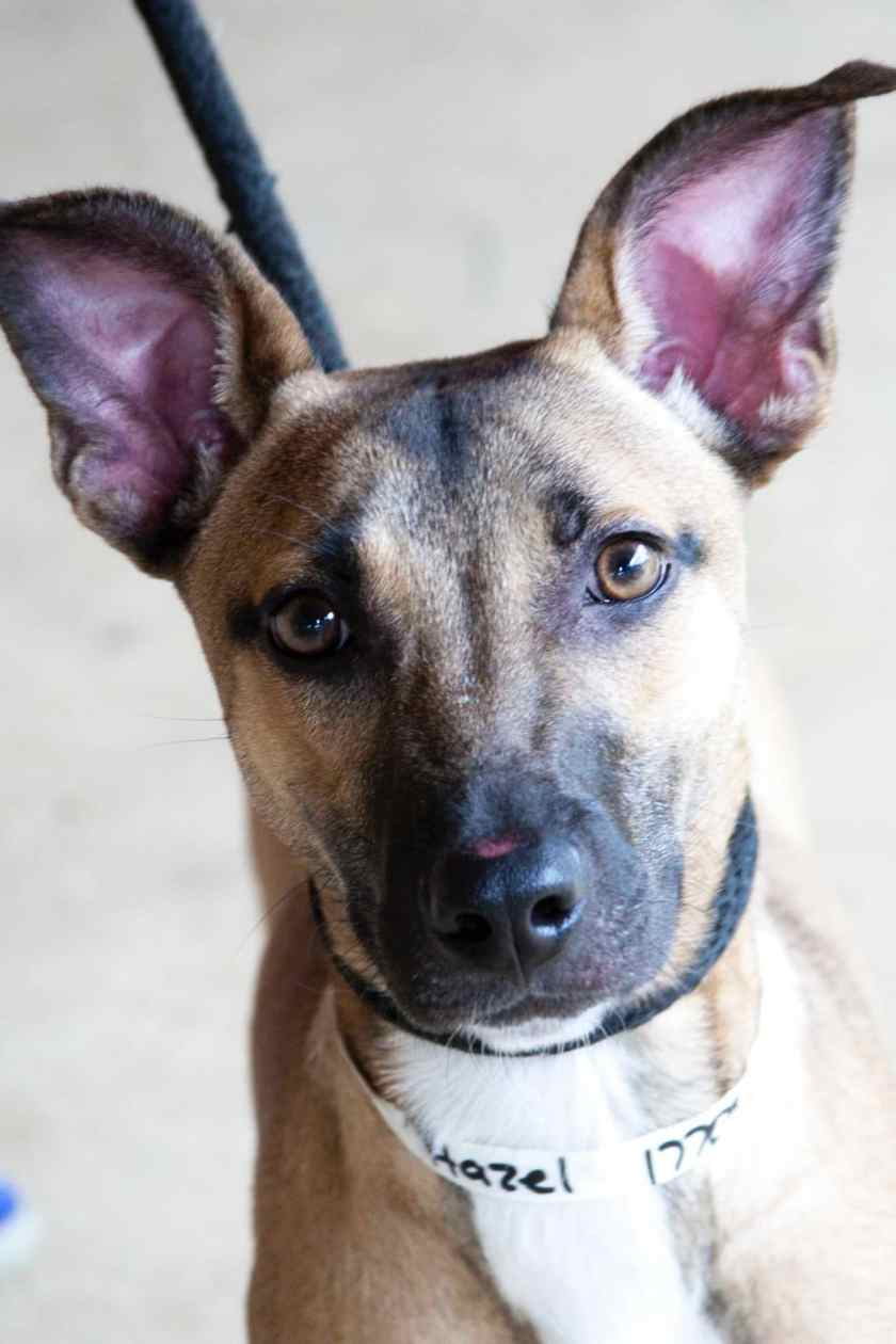 Dex and Hazel Adorable Pups and Adoptable Pet of the Week