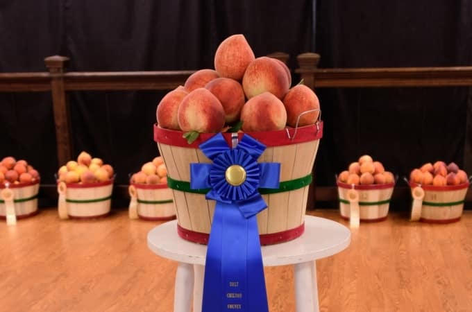 Chilton County peach crop hit hard.  Auction raises $25K for Lions Club