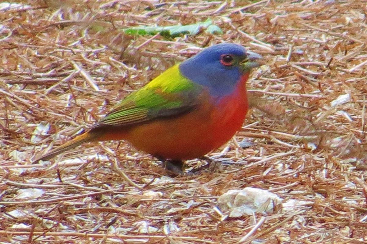 The summer of birds: Bird-watching, brews and grants