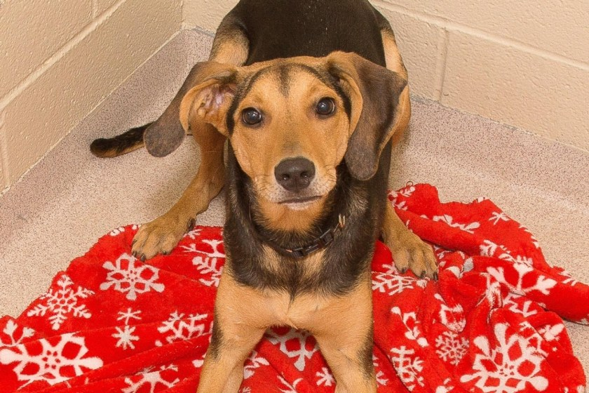 Adorable and Adoptable Pet of the Week Steris Health Birmignham AL Bham Now Minnie Jazzy Greater Birmingham Humane Society