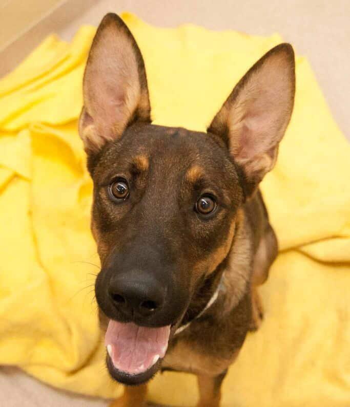Dingo and Kiwi Birmingham Adorable and Adoptable
