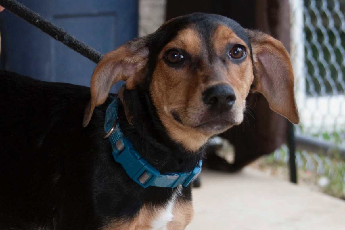 Adorable and Adoptable Pet of the Week: Attica