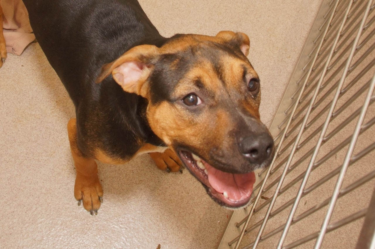 Adorable and ADoptable Pet of the Week Marbles