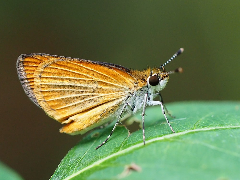 Bham Now Nature Roundup for the week of August 5, 2018