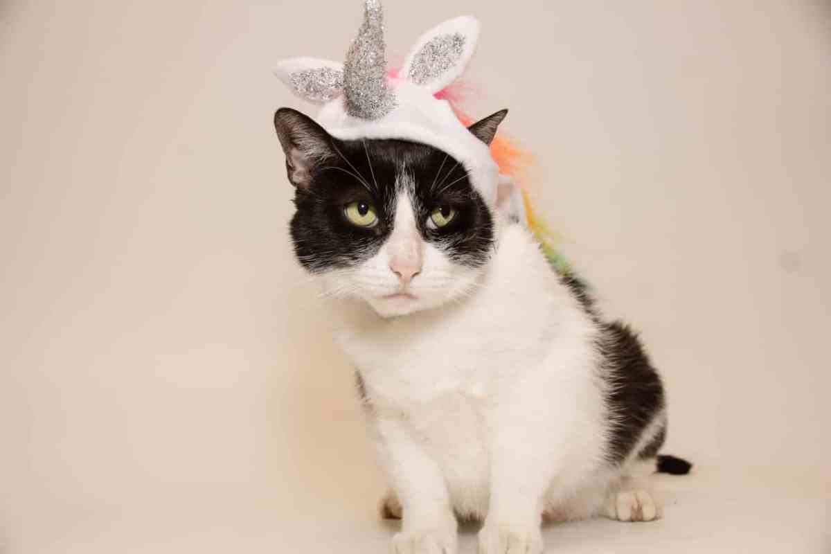 Adorable and Adoptable Pets of the Week: Batman and Delilah