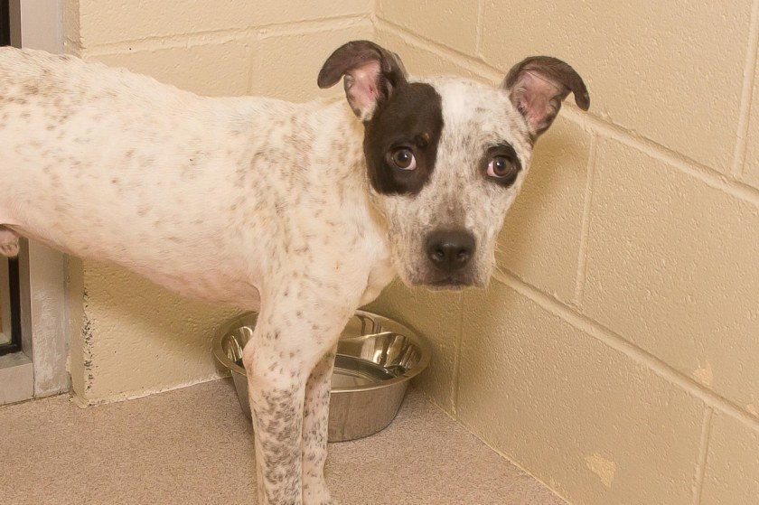 Adorable and Adoptable Pet of the Week: Pocus