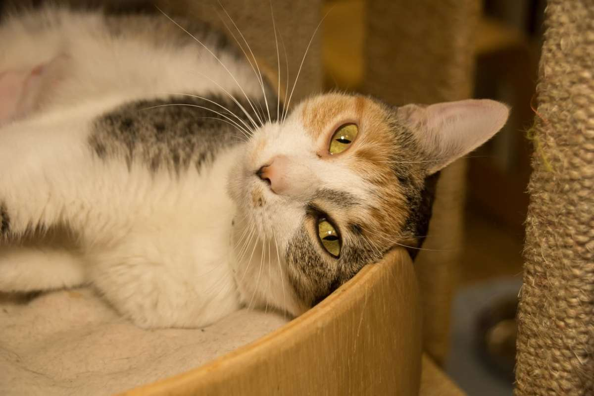 Adorable and Adoptable: Cranberry