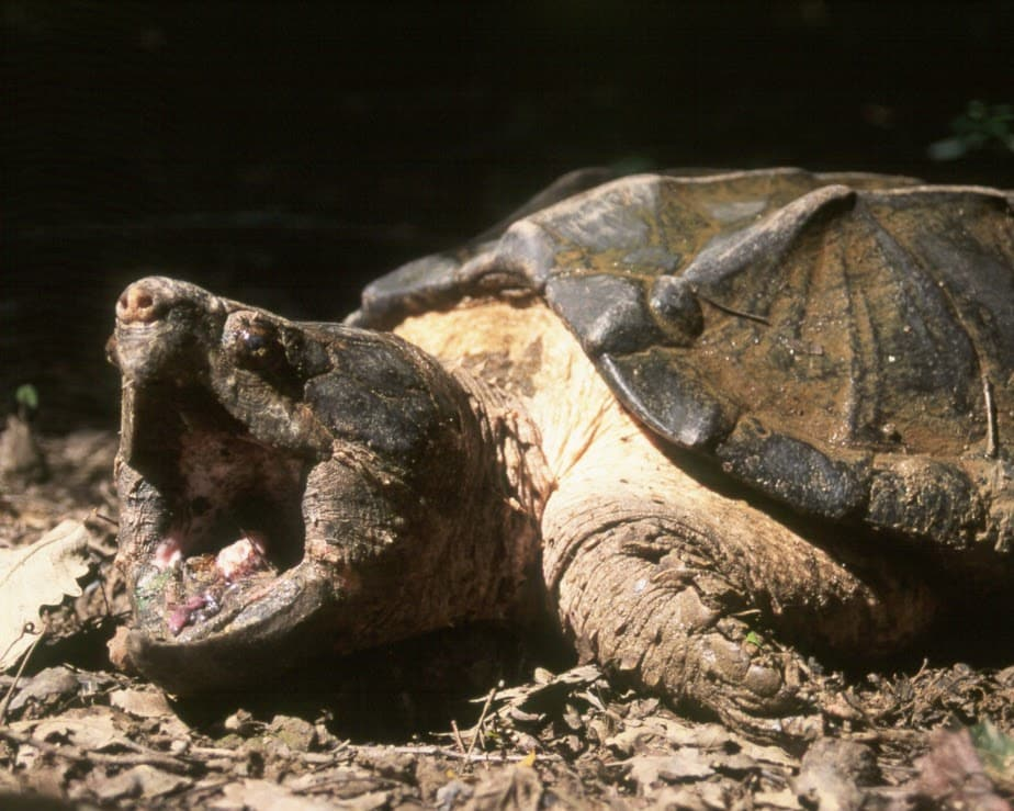 Darters to turtles: Why Alabama's aquatic biodiversity matters