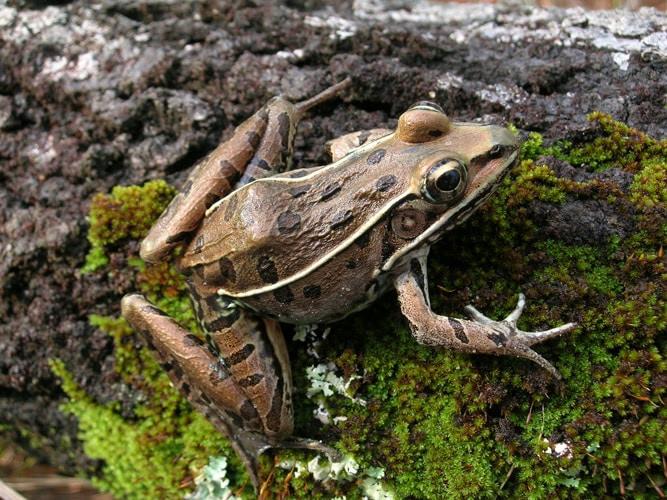 Alabama aquatic biodiversity