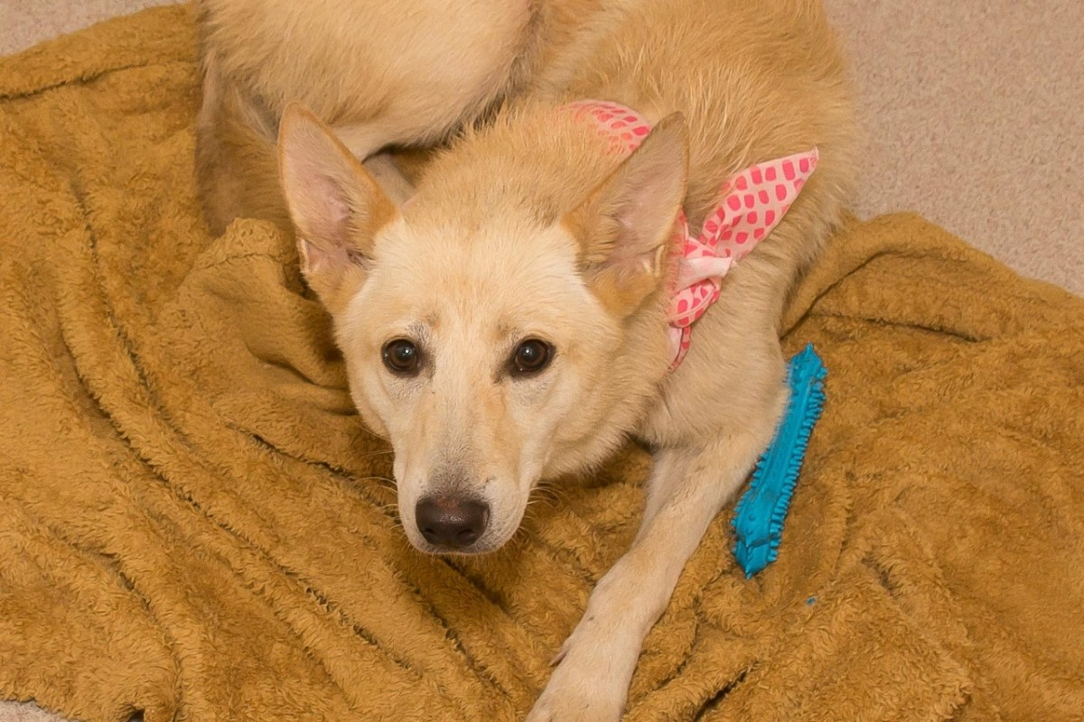 Adorable and Adoptable Pet of the Week: Pumpkin