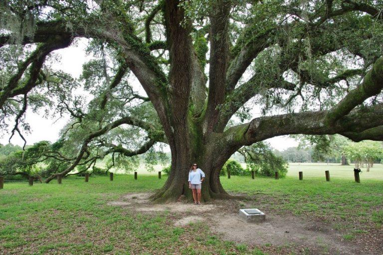 Alabama Trees