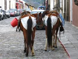 Birmingham, Alabama, horse, diapers