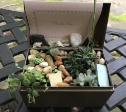 Birmingham, Alabama, DIY succulent