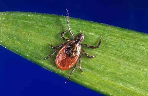 Birmingham, Alabama, ticks, Centers for Disease Control and Prevention, CDC